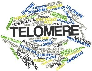 Abstract word cloud for Telomere with related tags and terms